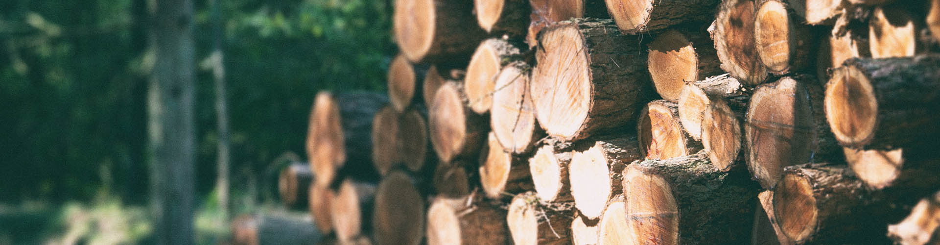 this image shows FSC certified wood